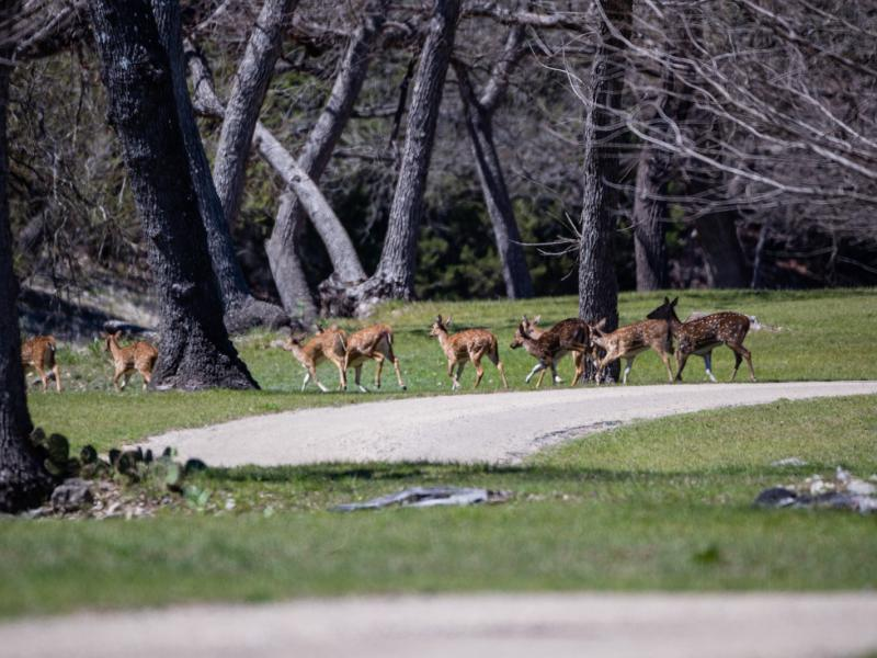 Deer crossing in 7 Springs Ranch land for sale.