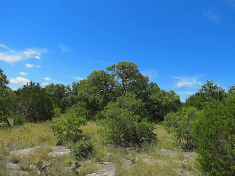 trees amongst rocks and tall grasses land for sale in llano county texas