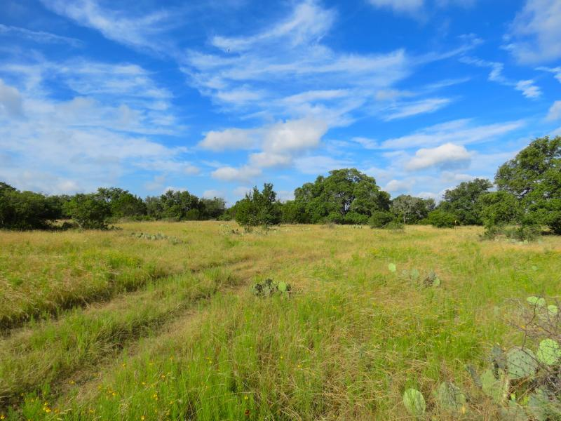 Horseshoe Bay Ranch consists of 100% native grasses