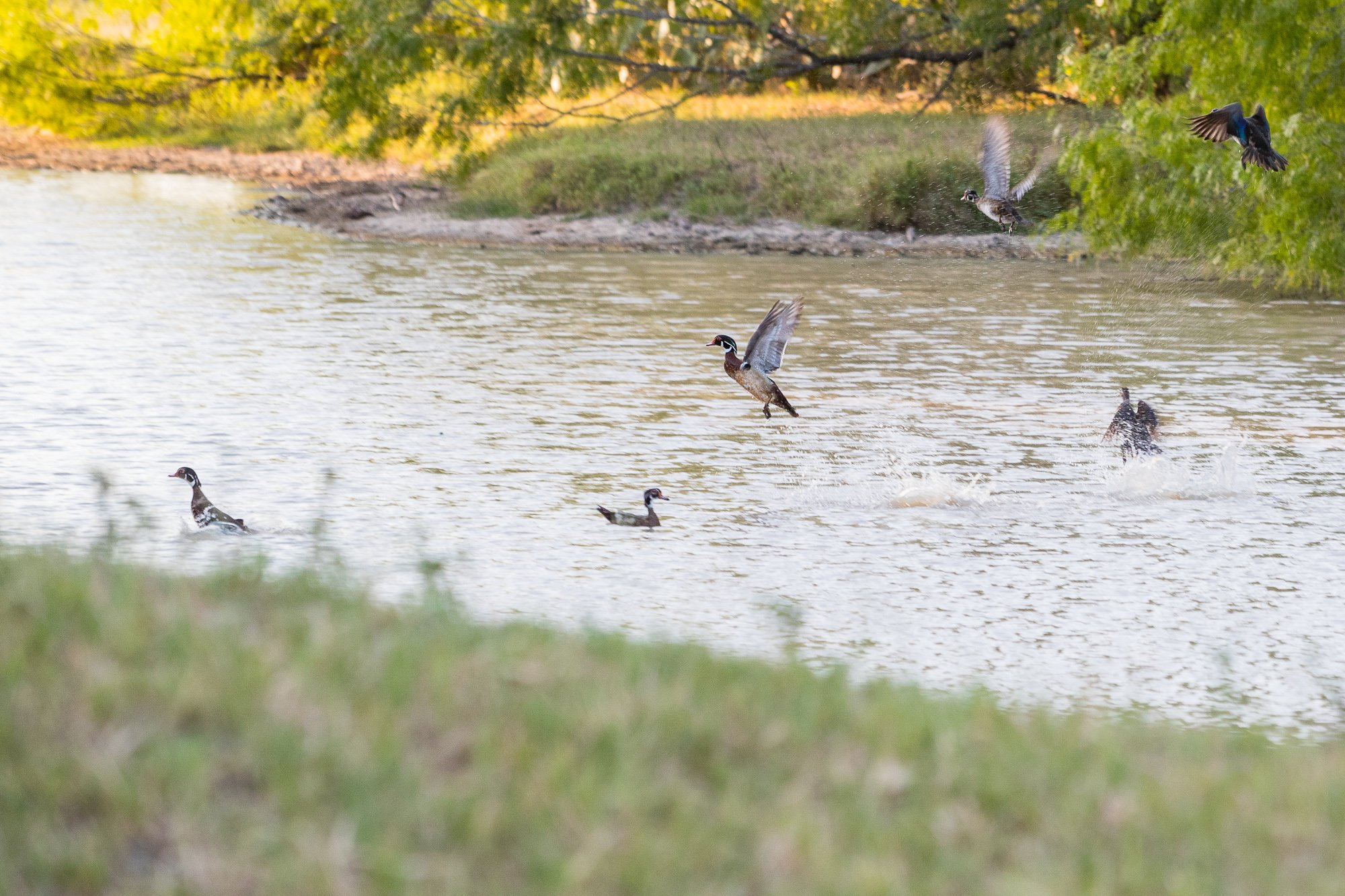 Smiley Ranch is a recreational hunting property with abundant deer, turkey, hags and doves