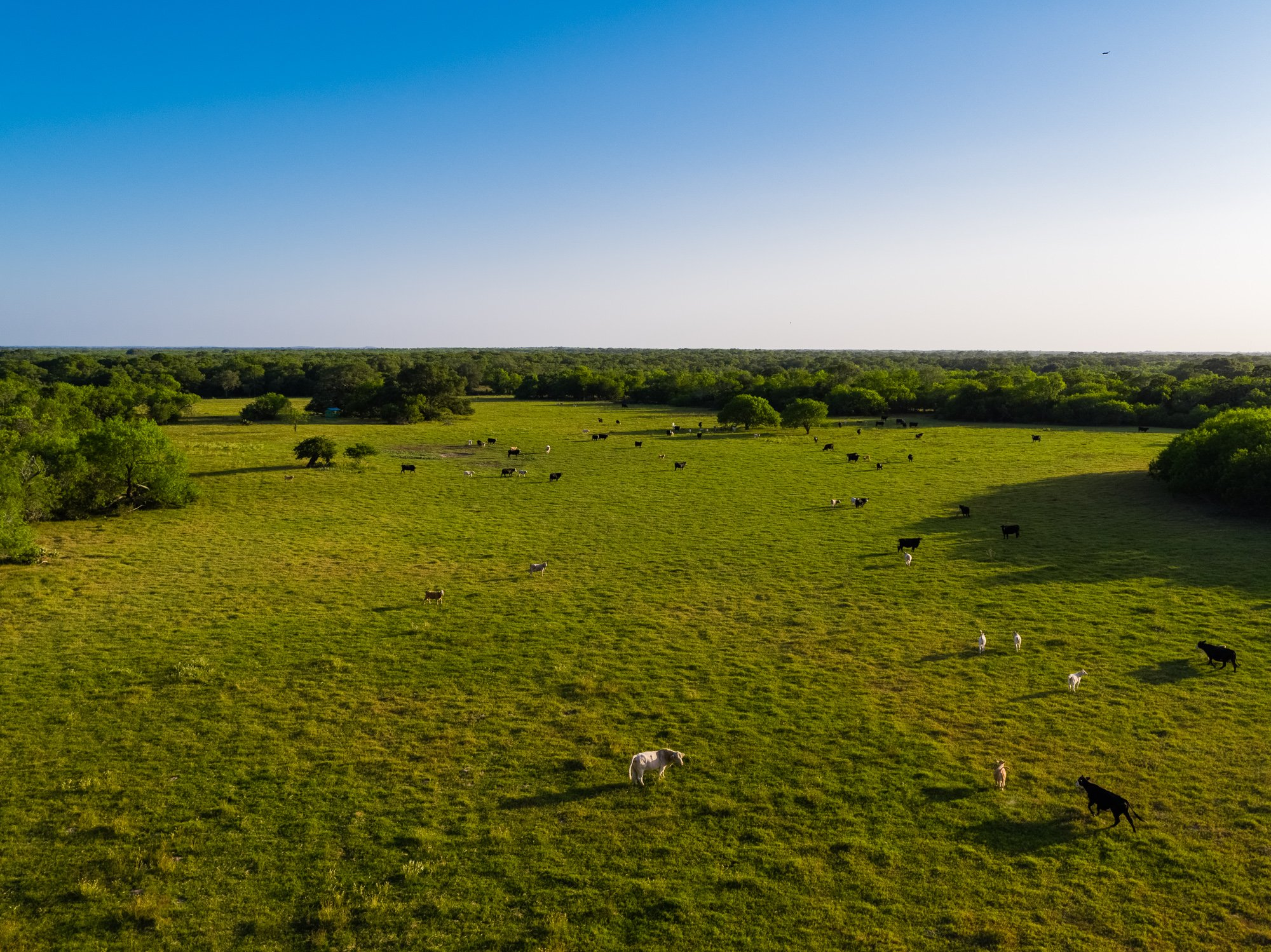 Smiley Ranch is a beautiful piece of Texas for sale
