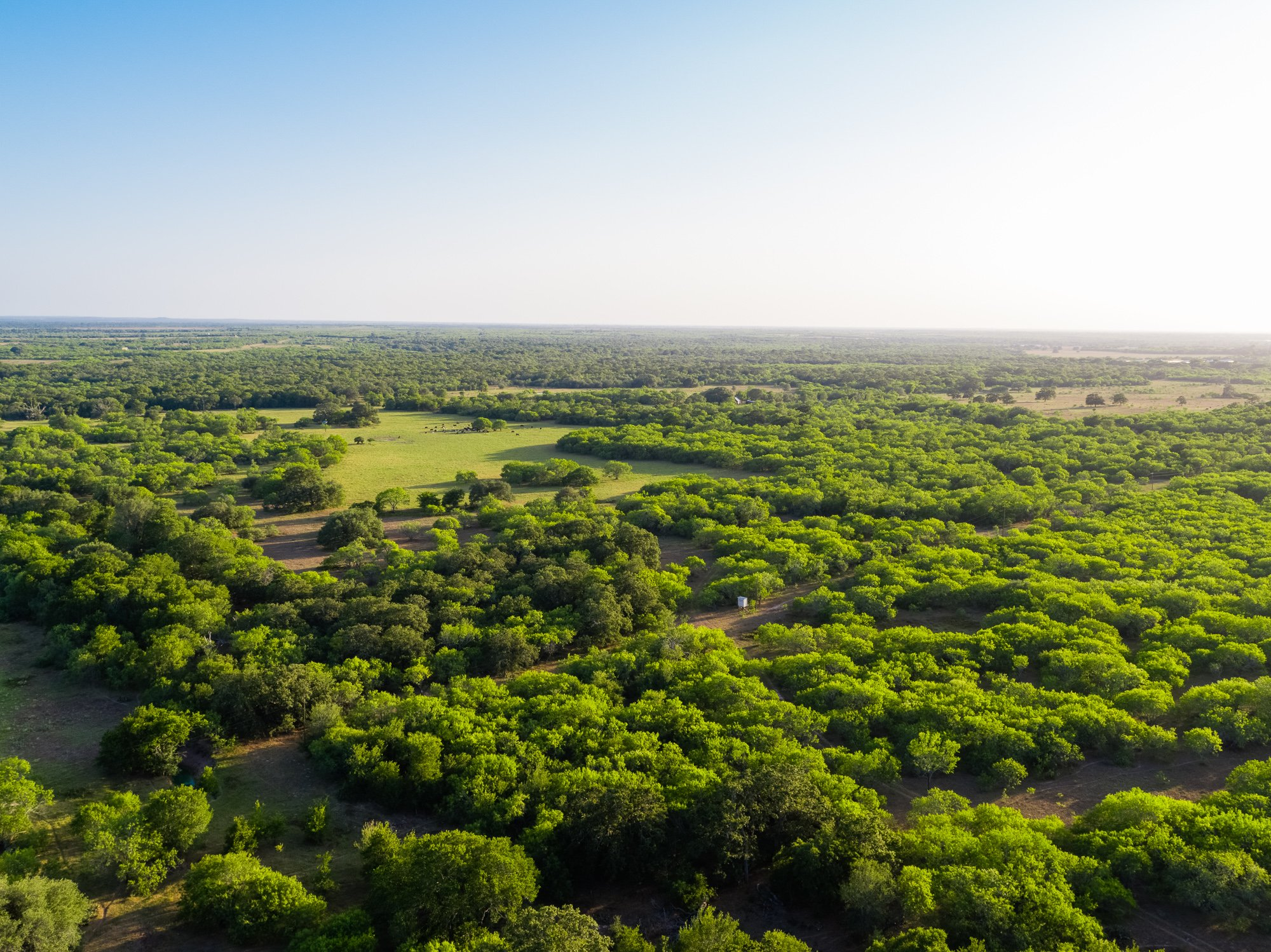 Smiley Ranch is for sale in Gonzales County