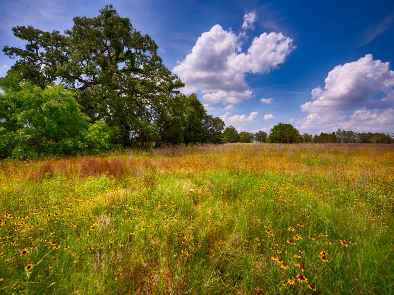Waelder Ranch native flora and fauna improved ranch for sale
