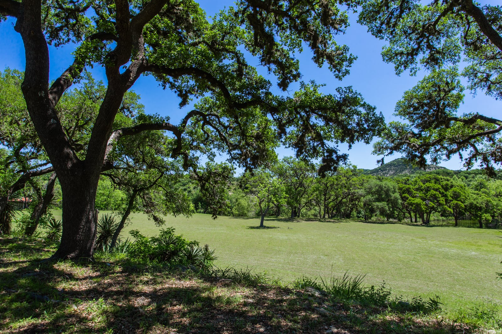 souht texas ranches for sale